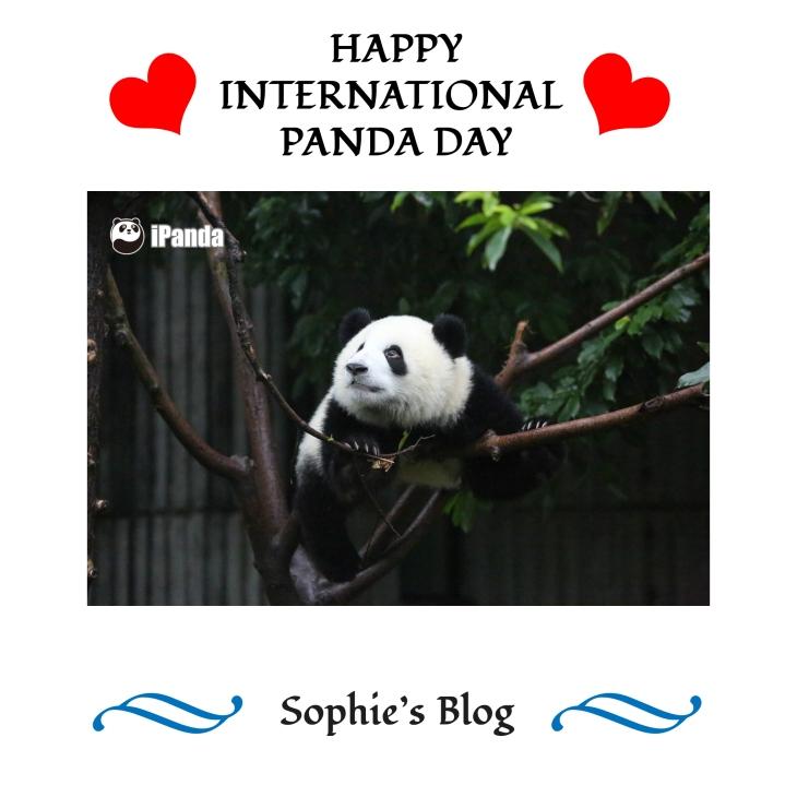 international-panda-day